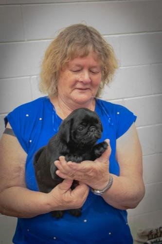 Bhyde 201206 Hug a pug Auckland-11