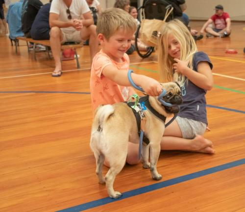 Bhyde 201206 Hug a pug Auckland-125