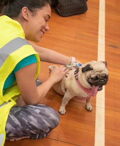 Bhyde 201206 Hug a pug Auckland-148
