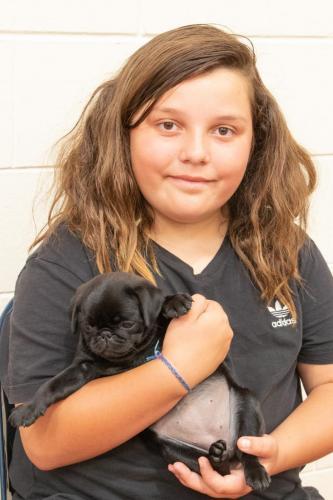 Bhyde 201206 Hug a pug Auckland-17