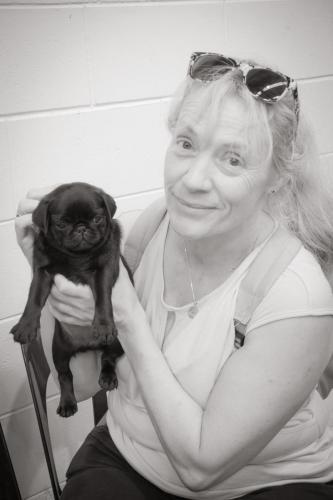 Bhyde 201206 Hug a pug Auckland-20