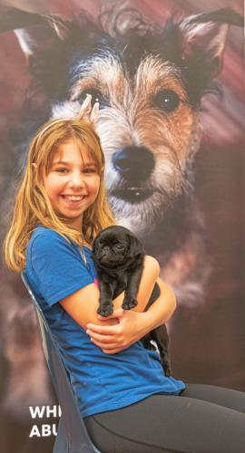 Bhyde 201206 Hug a pug Auckland-23