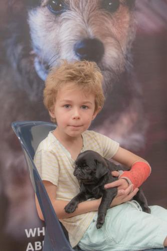 Bhyde 201206 Hug a pug Auckland-28