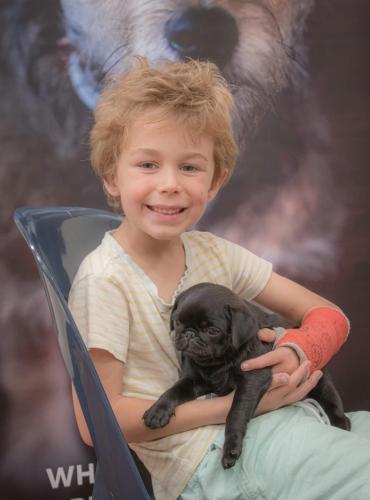 Bhyde 201206 Hug a pug Auckland-29