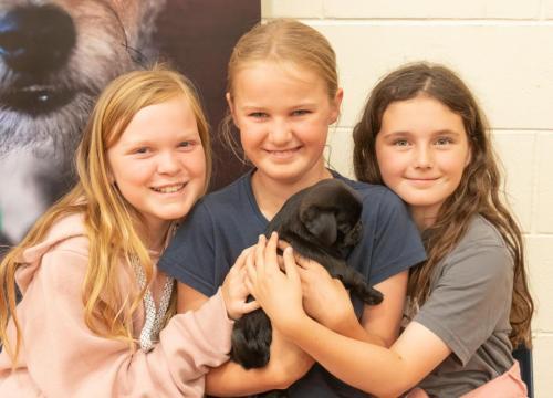 Bhyde 201206 Hug a pug Auckland-34
