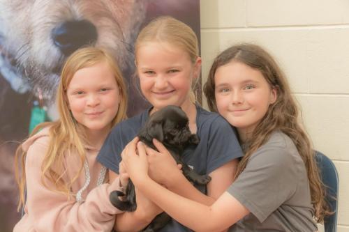 Bhyde 201206 Hug a pug Auckland-36