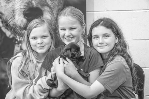 Bhyde 201206 Hug a pug Auckland-37