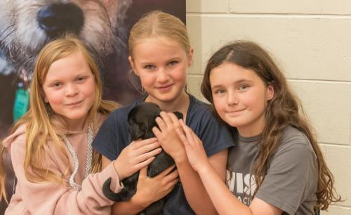 Bhyde 201206 Hug a pug Auckland-38