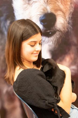 Bhyde 201206 Hug a pug Auckland-45